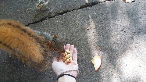 I love my squirrels