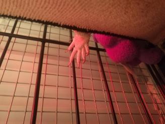 dangling fingers of cuteness!