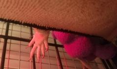 Oh man, what a cute hand!