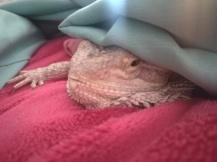 I am not a morning lizard!