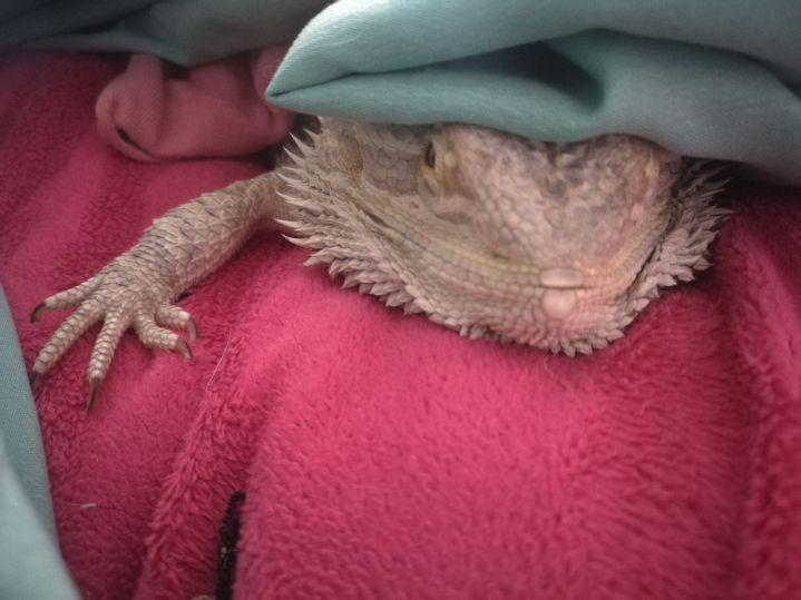I'm sleepy Mommy