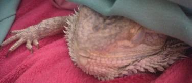 Sleepy Lil' Murph