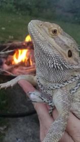 Campfire Murph